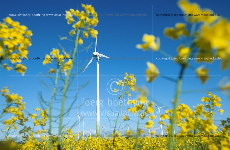 GERMANY, rape seed field and windpark in Mecklenburg-Vorpommern / DEUTSCHLAND, Windpark bei Luebz, Rapsfeld und Enercon und NEG Micon Windraeder