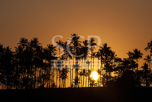 Northeast Brazil. Golden sun setting behind palm trees.