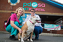 16/11/18<br /> <br /> Sasha 'after' photo at PDSA Leicester.<br /> <br /> All Rights Reserved: F Stop Press Ltd. +44(0)7765 242650  www.fstoppress.com www.rkpphotography.co.uk