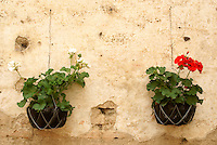 Potted geraniums at ruins of the Spanish colonial Cathedral in Antigua, Guatemala. Antigua is a UNESCO World heritage site.