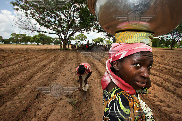 A woman carries a bowl across a field that is being prepared for planting casava. The farm belongs to a Zimbabwean farmer, one of several who were invited to set up farms in Kwara State after being forced from their farms in Zimbabwe.