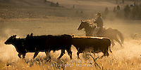 Wyoming cowboy herding cattle Cowboys working and playing. Cowboy Cowboy Photo Cowboy, Cowboy and Cowgirl photographs of western ranches working with horses and cattle by western cowboy photographer Jess Lee. Photographing ranches big and small in Wyoming,Montana,Idaho,Oregon,Colorado,Nevada,Arizona,Utah,New Mexico.