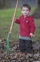 Young boy helps rake leaves. My Final Photo taken  Nov. 21, 2004.<br /> <br /> Photo Copyright 2004 Gary Gardiner. Not to be used without written permission detailing exact usage. Photos from Gary Gardiner, may not be redistributed, resold, or displayed by any publication or person without written permission. Photo is copyright Gary Gardiner who owns all usage rights to the image. Low resolution photo with watermark.