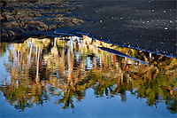 Punaluu, reflection of palm trees in water near a black sand beach