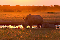 Two rhinos at a waterhole at sunset