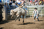 The end of the ride is near for this cowboy with the clown ready to distract the bull.
