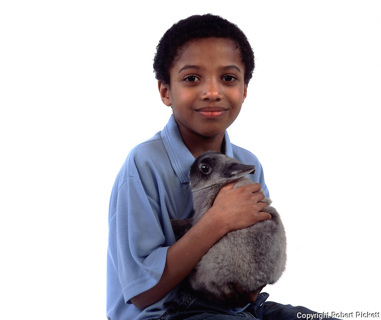 Young Boy holding Pet Rabbit, Grey Colour, aged 10 years old, domestic, white background, cut out, studio, smiling