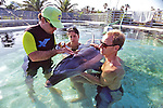 Cleaning Dolphin Wound