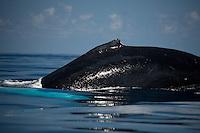 Humpback-whale-fin