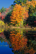 Reflection of autumn foliage in Clark's Pond in Auburn, New Hampshire USA during the autumn months.
