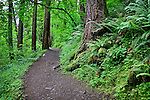 Path to Oneota Falls, Columbia River Gorge National Scenic Area, Oregon