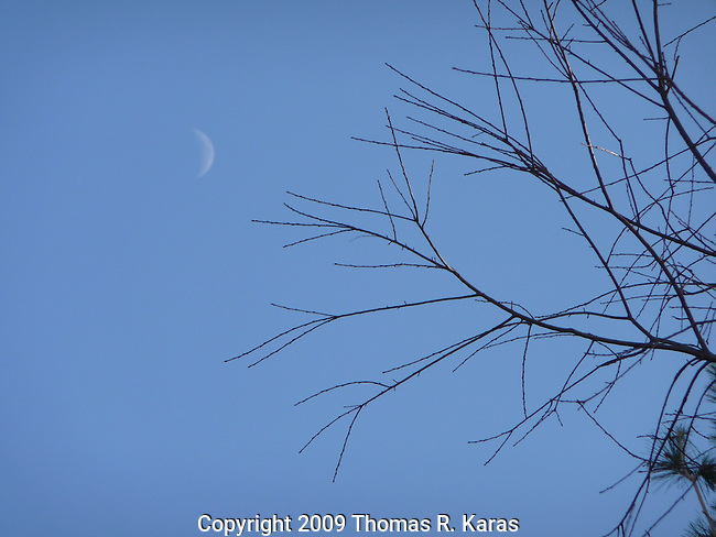 A crescent moon rises behind a tree stripped bare of leaves in winter.