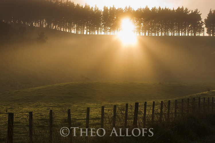 Farm fence and trees backlit at sunrise