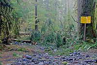 Ironic warning sign located immediately before a scene of downed forest trees and a washed-out Carbon River Road. Damaged by record November, 2006 Floods and Windstorms at Mount Rainier National Park, Washington State.....Photographed on digital media.