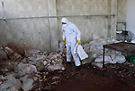 "A Palestinian worker, wearing protective gear, backs dead turkeys in plastic bags at a live-poultry farm in the West Bank village of Serees, southern Jinin January 21, 2015. A flock of 17,000 turkeys has been diagnosed with the H5N1 ""bird flu"" virus in Jinin. The veterinary department of the Palestinian Authority Agriculture Ministry said it had managed to prevent an epidemic. Photo by Nedal Eshtayah"