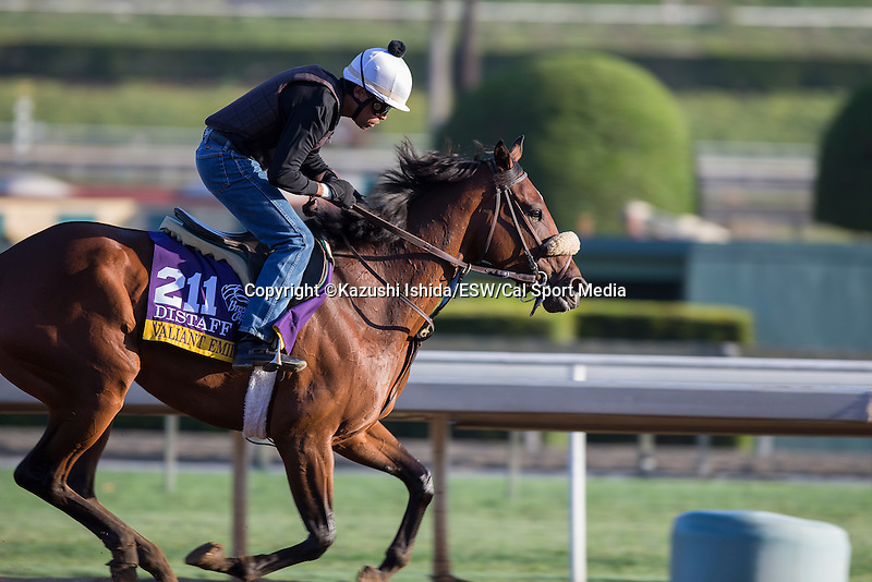 OCT 28 2014:Valiant Emilia, trained by Gary Mandella, exercises in preparation for the Breeders' Cup Distaff at Santa Anita Race Course in Arcadia, California on October 28, 2014. Kazushi Ishida/ESW/CSM