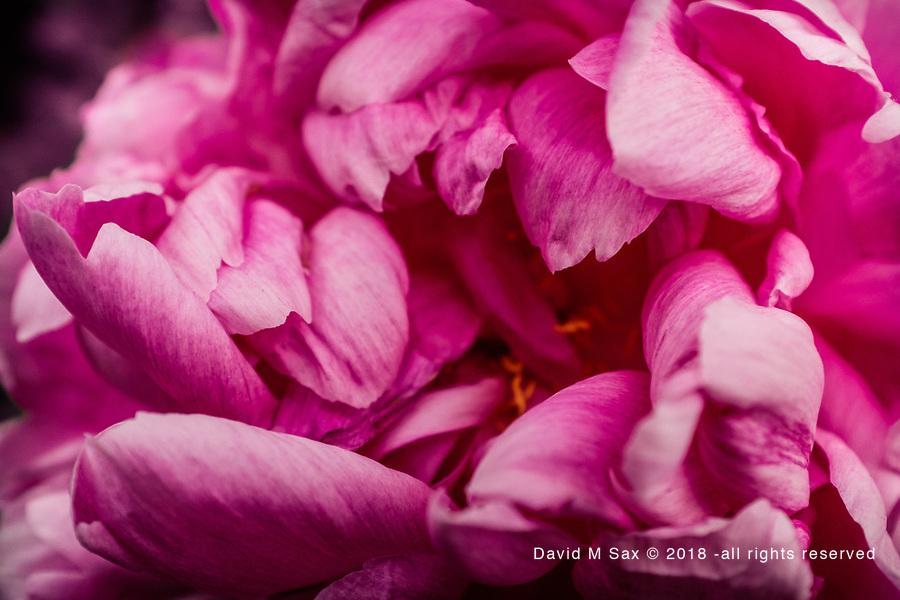 6.7.17 - Petals....