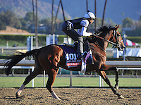Alterite, trained by Chad Brown, trains for the Breeders' Cup Filly & Mare Turf at Santa Anita Park in Arcadia, California on October 30, 2013.