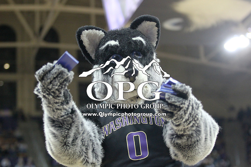 February 12, 2014:   Washington mascot Harry entertained fans during a time out.  Washington defeated Stanford 64-60 at Alaska Airlines Arena in Seattle, Washington.
