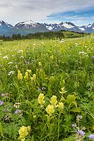 Scenic of the Kenai Mountains and wildflower meadows, Lost Lake Trail, Chugach National Forest, Kenai Peninsula, Alaska.