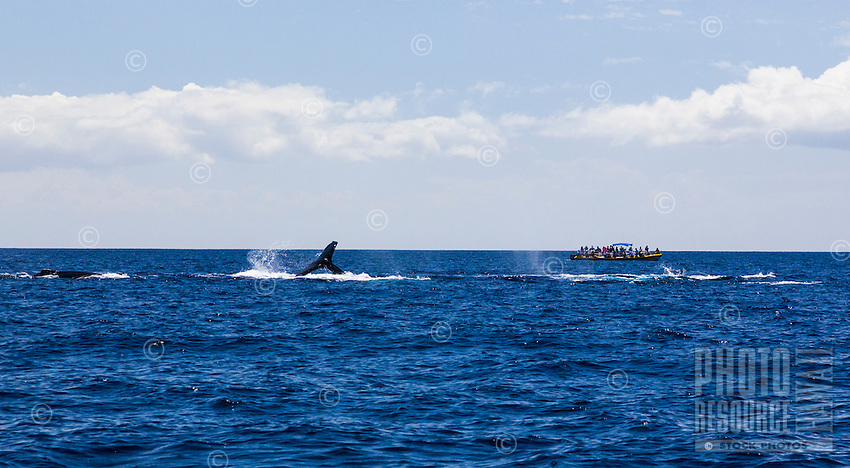 Tourists sightseeing and whale watching from a boat off the coast of Maui.