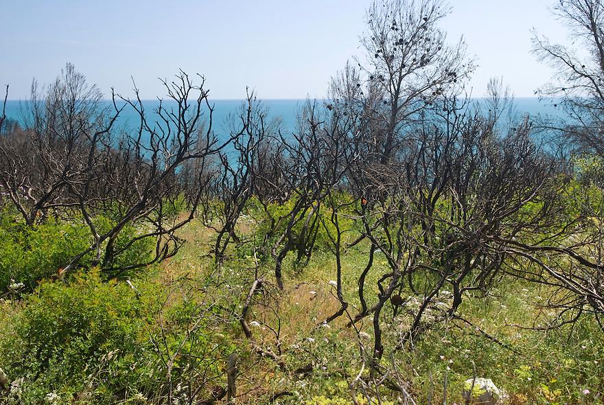 Apulia; forest fire; Gargano National Park; Gargano Peninsula; Italy; Vieste