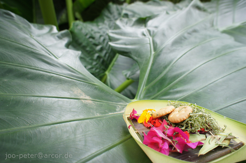 typical balinese offering, brought out every day, here on a leaf of Taro, Bali, archipelago Indonesia, 2010