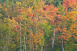 The hardwood trees of northeastern PA changing color in the fall.