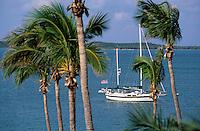 Iles Bahamas /Ile d'Eleuthera/Harbour Island/Dunmore Town: Palmiers et océan vus depuis la terrasse de l'Hotel Romora Bay à Dunmore Town