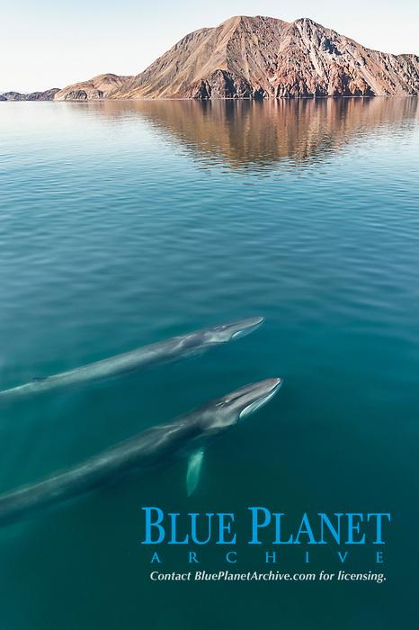 fin whale, blaenoptera physalus, pair, surfacing, Baja California, Mexico, Gulf of California, aka Sea of Cortez, Pacific Ocean