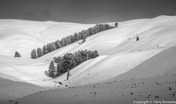 Yellowstone National Park, Wyoming, Isolated stands of trees in the folded hills of the Lamar River Valley, winter