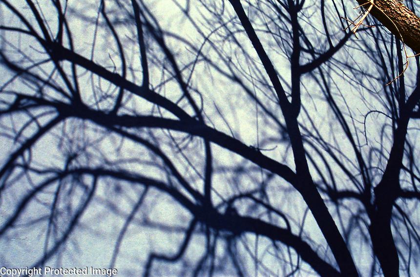 Winter Tree's Shadow