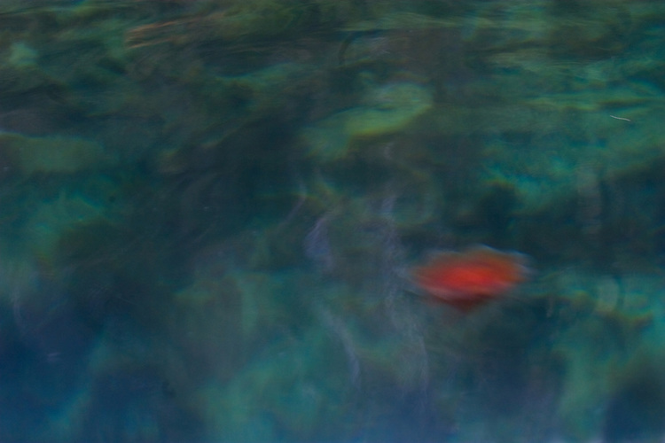 Alaska, Prince William Sound, marine environment, water column, jellyfish,