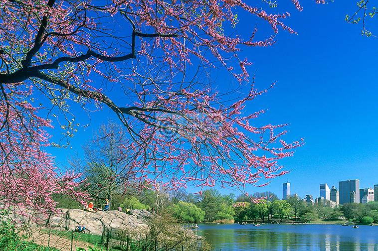 THE LAKE MIDTOWN SKYLINE MANHATTAN NEW YORK CITY USA