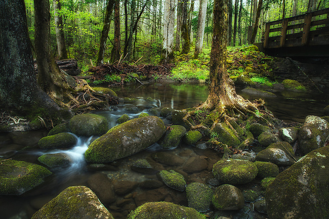 Spring in the Smokies <br />