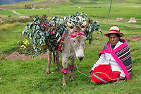 Peru, Moray, Urubamba Valley.  Quechua Woman and her Donkey.