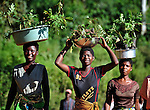 Women walk along a road near Thekerani, in southern Malawi, carrying plants to sell at market. These plants are useful in improving the fertility of the soil.