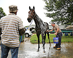 New York Post Columnist John Crudele bathes Mo's In The House, a thoroughbred in the barn of Trainer Chuck Spina at Monmouth Park in Oceanport, New Jersey on Saturday July 9, 2016. Photo By Bill Denver/EQUI-PHOTO