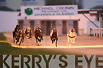 Hare, there, everywhere. Mossend Howler sees off the challenge of Joyful Lofty and Scart Bill in the Kingdom Stadium.Failte 525 race at the Greyhound Stadium on Friday evening.