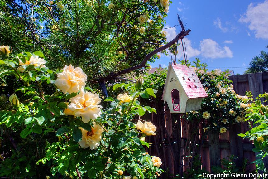 Teresa Cotton, communities in Bloom Garden Tour.