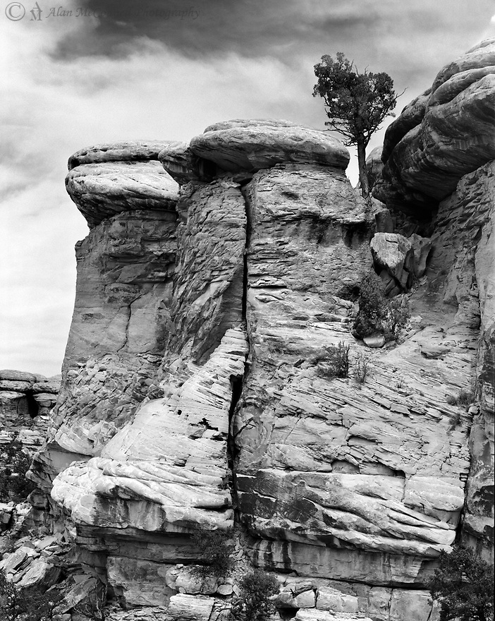The Needles District of Canyonlands National Park has many interesting rock formations.  Here a single tree rises slightly above two towers trying to survive this harsh environment.