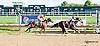 Banner Elk Lady winning at Delaware Park on 9/28/13