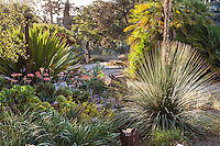 Morning light in drought tolerant California succulent garden beds and borders - Ruth Bancroft Garden