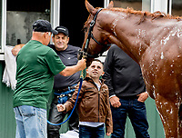 ELMONT, NY - JUNE 07: Devon Divirgilio, 8, from Long Island gets to meet Justify as he gets a bath after working out Thursday for the 150th running of the Belmont Stakes at Belmont Park on June 7, 2018 in Elmont, New York. (Photo by Scott Serio/Eclipse Sportswire/Getty Images)