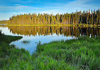 Boreal Forest and lake shoreline at sunset<br /> Near Pickle Lake<br /> Ontario<br /> Canada