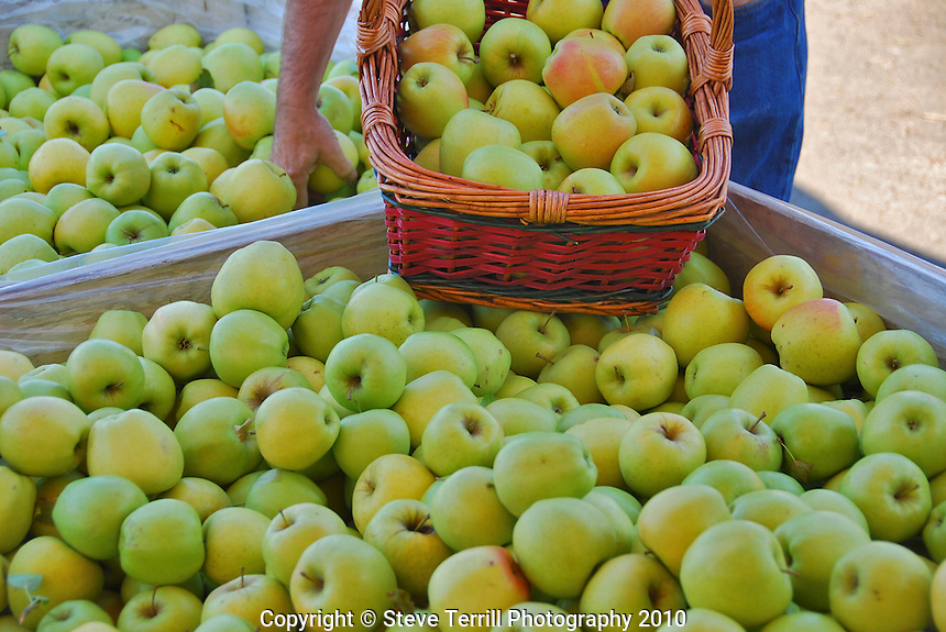 Filling a basket with apples at local fruit stand in Hood River Valley, Oregon