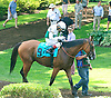 Holiday Star before The Cape Henlopen Stakes at Delaware Park on 7/11/15
