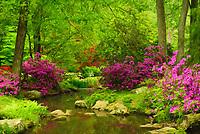 landscape of azaleas and stream at Maymont Park in Richmond, VA