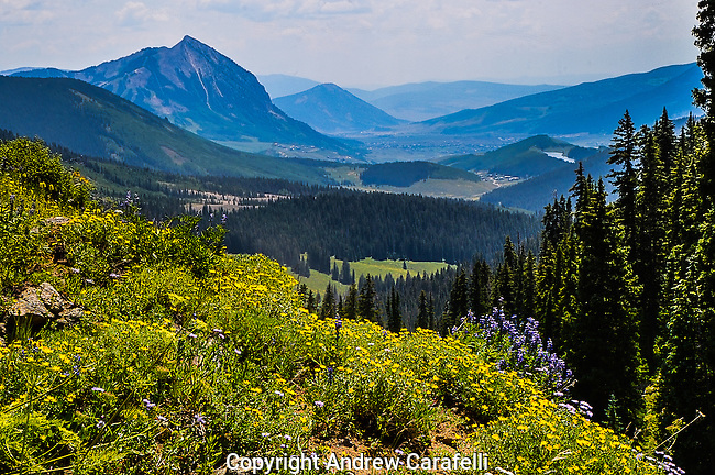 "While Crested Butte, Colorado is known for its mountain biking and winter skiing, it is also known as the ""Wild Flower Capitol of The World.""  Here, wild flowers explode atop Anthracite Mesa as Crested Butte rises in the background."
