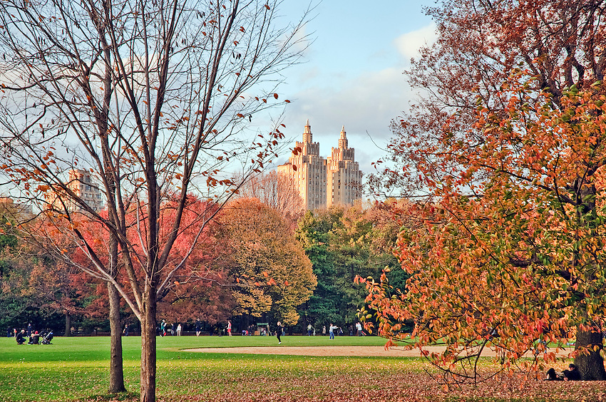 Fields in Central Park during autumn